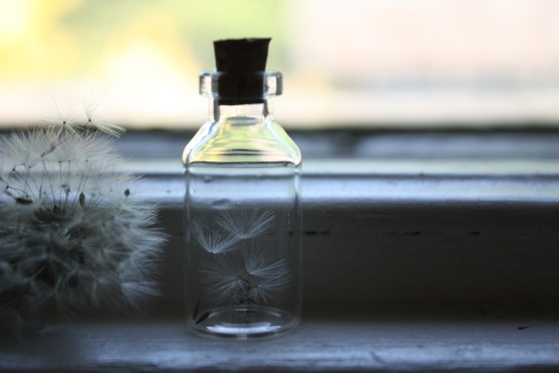 Dandelion Seed Necklace – a wish in a jar